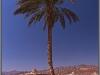 Egypt, Danab, Hilton Resort