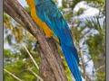 Indonesia, Bali, birds park
