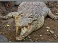 Indonesia, Bali, reptile park