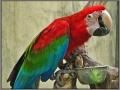 Indonesia; Bali; Birds Park