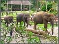 Indonesia; Bali, elephant safari park
