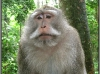 Indonesia; Bali; monkey forest