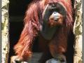 Indonesia; Bali zoo