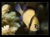 Komodo, Flores sea, Indian Ocean, Indonesia