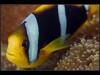Wakaya Reef, Koro Sea, Pacific Ocean, Fiji Islands
